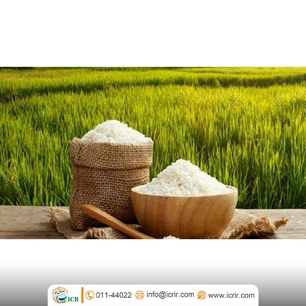 اقدامی در راستای تنظیم بازار برنج