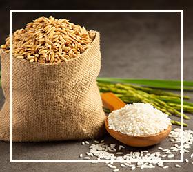 تاریخچه برنج